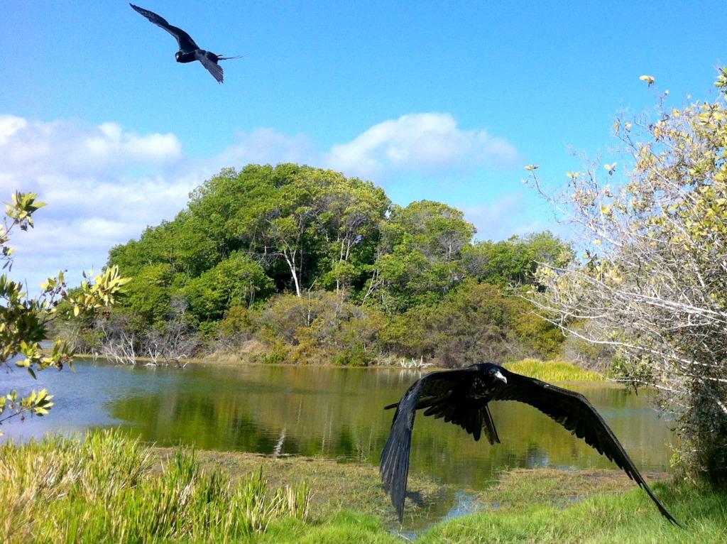 Normalerweise ist es schwierig mit einem Smartphone gute Aufnahmen von Vögeln zu machen. Es sei denn, man steht unwissentlich direkt neben einem toten Fisch.