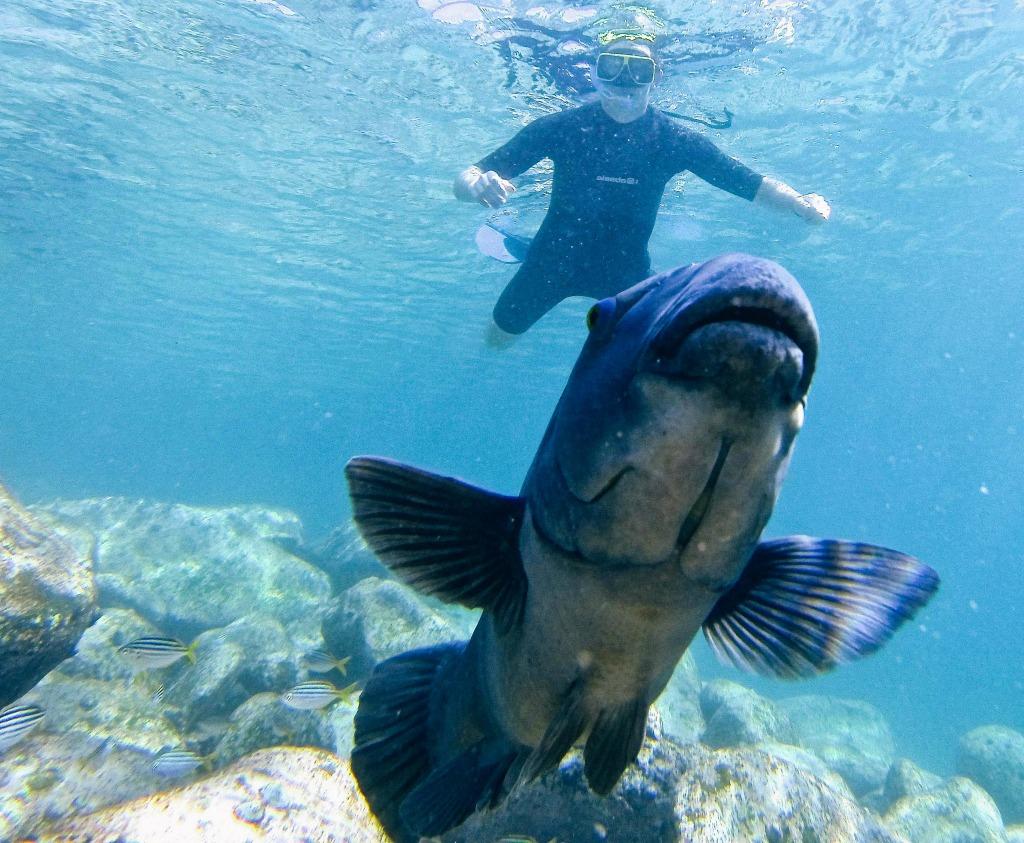 ein lächelnder australischer Fisch